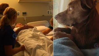 The Moment This Dog Said A Final Goodbye To Her Owner Is Absolutely Heartbreaking