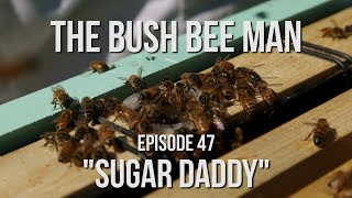 """Feeding Bees with Sugar Water for Winter - Episode 47: """"Sugar Daddy"""""""