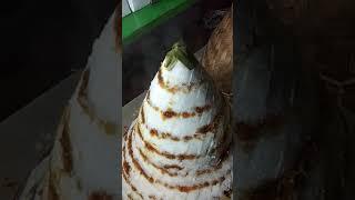 Cara Membuat Kue Dongkal Khas Sunda ฟร ว ด โอออนไลน ด ท ว