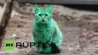 Прикольный зеленый кот из Болгарии HD. Green cat