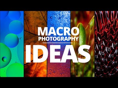 5 macro photography ideas you can try at home