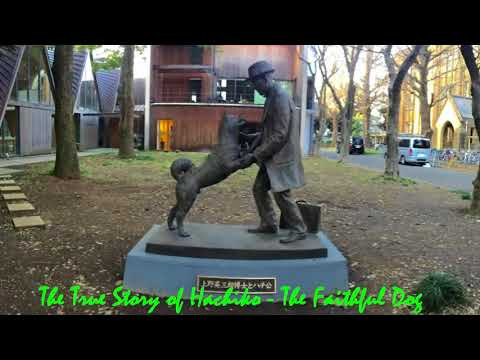 The True Story of Hachiko - The Faithful Dog