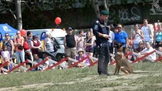 Polizeihunde-Vorführung, Donauinselfest 2012