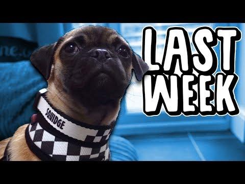 Last Week I Raised My Dog