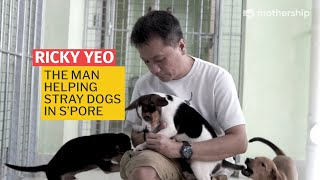Finding Homes For Stray Dogs in Singapore