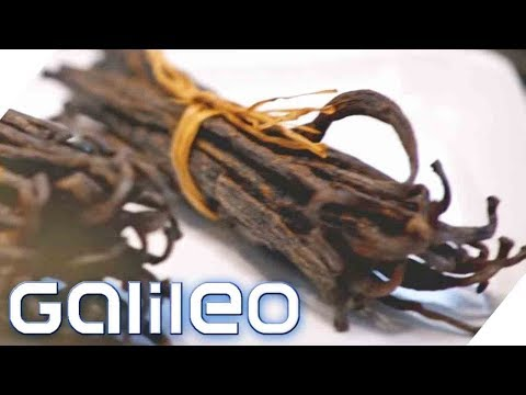 Wertexplosion! Warum ist Vanille TEURER als Silber? | Galileo | ProSieben