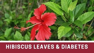Kill diabetes forever in just eight days / Hibiscus leaves and diabetes