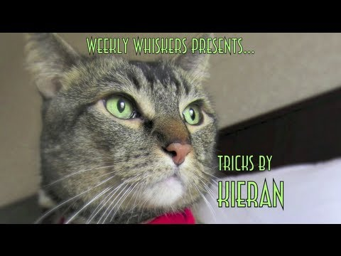 World's Smartest Rescued Shelter Cat