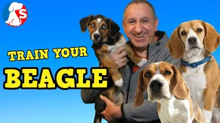 How To Train A BEAGLE To Listen & Behave