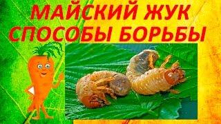 Срочно! Майский жук - смотреть всем! Способы борьбы с личинкой -