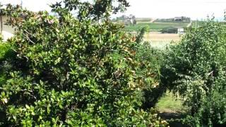 preview picture of video 'video villa cormons - hansfeller64.mp4'
