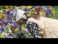 Download Video Августа теплый денёк…