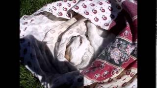 Burying My Feline Friend