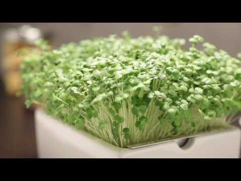 Heimgart Microgreens – der Garten für dein Heim!