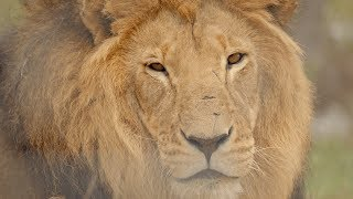 Want to go to South Africa for safari?