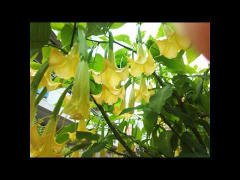 Les verrues du grain de beauté de la tache de rousseur et papillomy