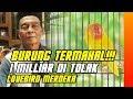 BURUNG TERMAHAL PENAWARAN 1 MILIAR TAK MEMBUAT LOVEBIRD MERDEKA DI JUAL