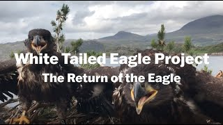 Thumbnail for White Tailed Eagle Project: The Return of the Eagle