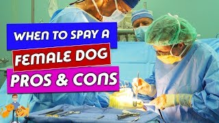 When to Spay a Female Dog: the true risks and benefits