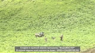 Смотреть онлайн Квадроцикл скатился по склону горы