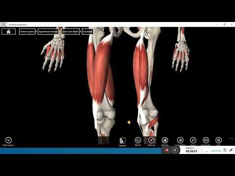 Hüvelykujjízületi fájdalom mozogva