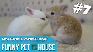 СМЕШНЫЕ ЖИВОТНЫЕ И ПИТОМЦЫ #7 СЕНТЯБРЬ 2018 [Funny Pet House] Смешные животные