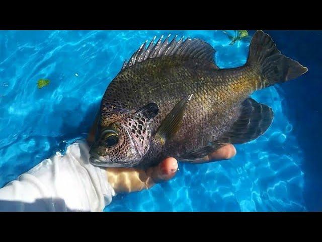 DIY HOMEMADE POOL Fish POND!!!