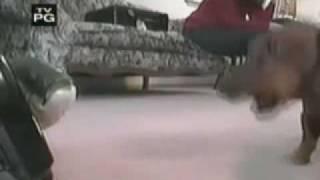 Funny Dog Videos!