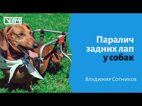 Паралич задних лап у собак