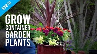 How To Grow Pot Plants In A Container Garden