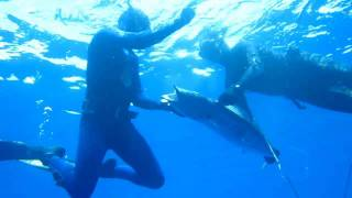 Spearfishing Guadeloupe By Nikos
