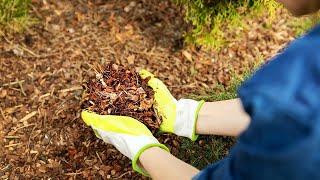 Niesamowity wpływ kory sosny na potencję, hemoroidy i naczynia. Koniecznie posłuchaj.