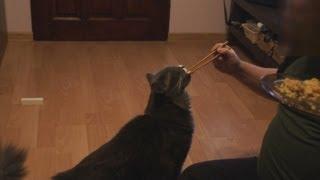 preview picture of video 'My cat loves Thai food / Mój kot kocha tajską kuchnię'