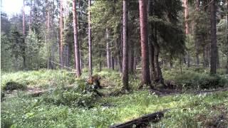 Niedźwiedź i Jenot na karmisku