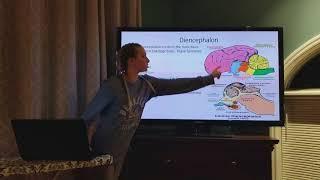 Anatomy of the canine brain