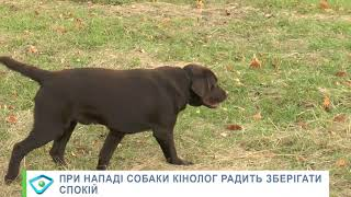 Харків'янку загризли мастифи: кінолог припустив, що могло спровокувати агресію собак