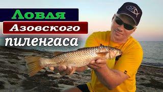 Рыбалка на азовском море пеленгас