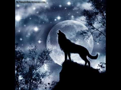 Wolf Like Dog