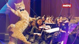 Коты поют гимн Лиги чемпионов   Cats sing UEFA Champions League song