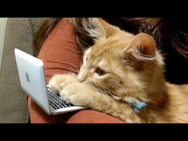 FUN & LAUGHTER GUARANTEED! Funniest ANIMAL moments - Funny animal compilation