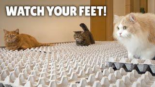 Egg Carton Challenge! Can My Cats Cross The Bumpy Road | Kittisaurus