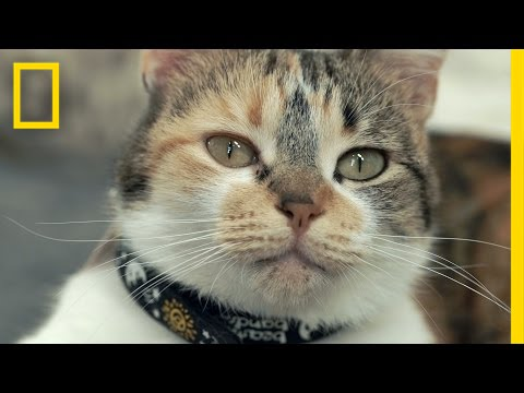 The Science of Meow: Study to Look at How Cats Talk | National Geographic thumbnail