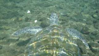 preview picture of video 'Swimming with Turtles 1'