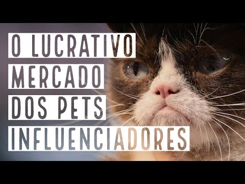 , title : 'The Business of Influence - Ep. 13: o lucrativo mercado dos pets influenciadores