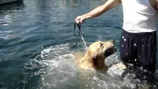 マリー長島で泳ぐ--Mary swimming (and sinking) in Long Island--