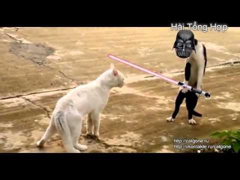 Video clip hài Hài hước với loài mèo 2