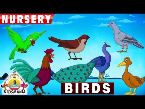 10 Birds Names for Children in English - Birds name with picture for