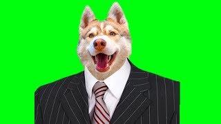 ПРЕЗИДЕНТ КВАРТИРЫ (Хаски Бублик) Говорящая собака Mister Booble
