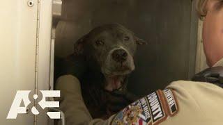 Live PD: Lucky Dogs (Season 2)   A&E