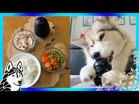 DIY DOG TREATS CHICKEN and RICE KONG  | Snow Dogs Snacks 68